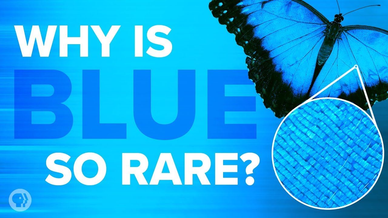 Why is Blue so rare?